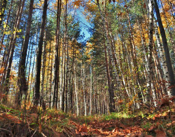Есенни маршрути в Разложкия край