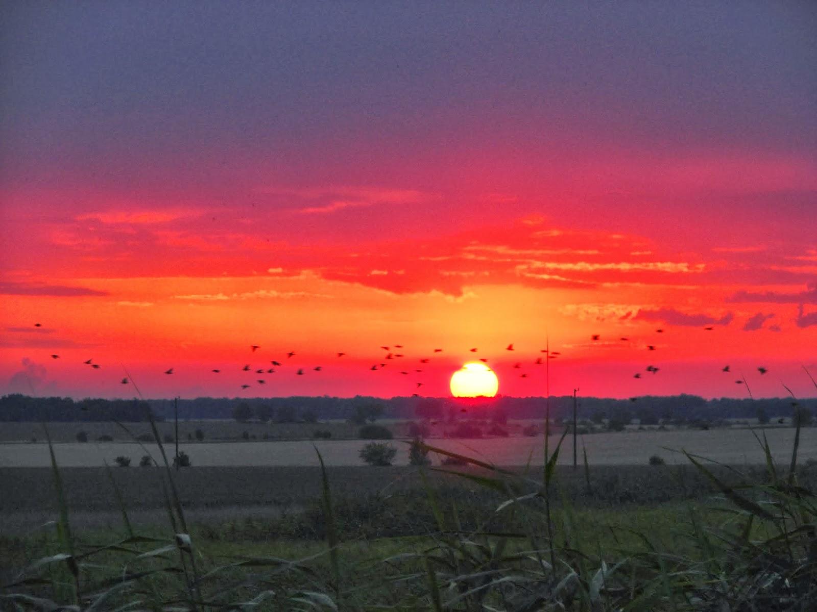 С падането на нощта небето над Дуранкулак се изпълва с организирани  птичи ята, които се стрелкат нагоре-надолу, като бойни ескадрили.