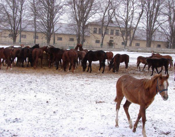 Кабиюк е царството на конете