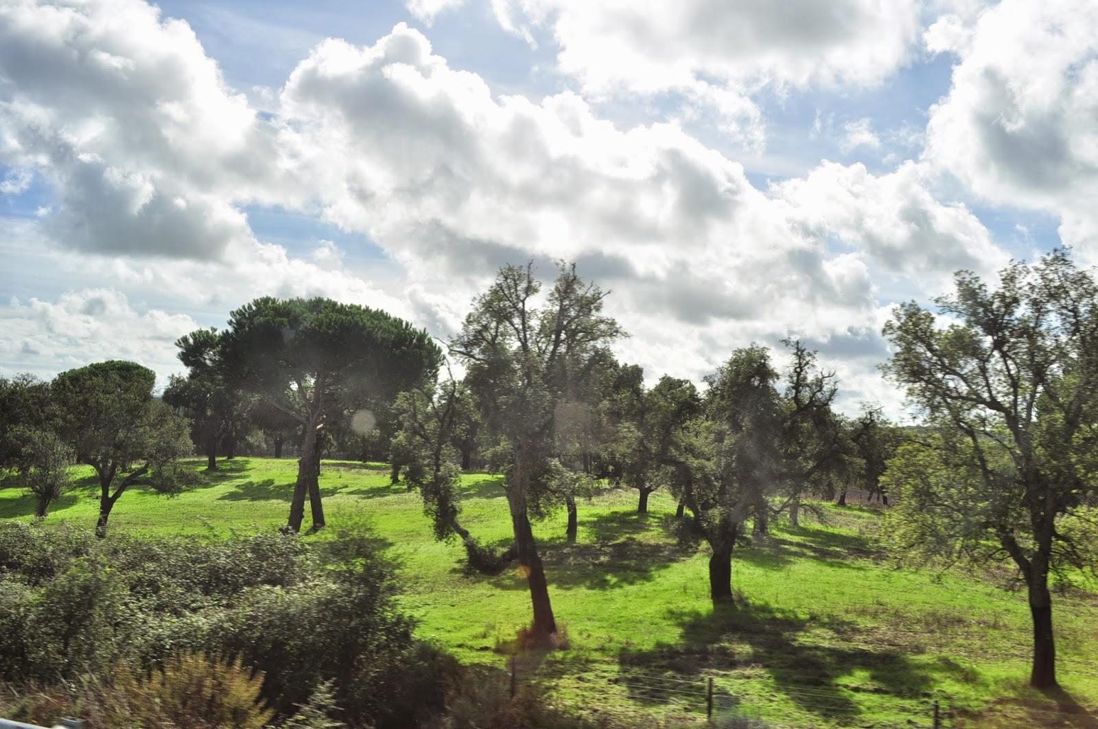 Голяма част от територията на Португалия е залесена с коркови дървета. Производството на корк е една от водещите местни индустрии. Освен тапи за вино, от корк произвеждат всичко което ти хрумне: чанти, шапки, обувки, дрехи, които обаче струват цяло състояние.