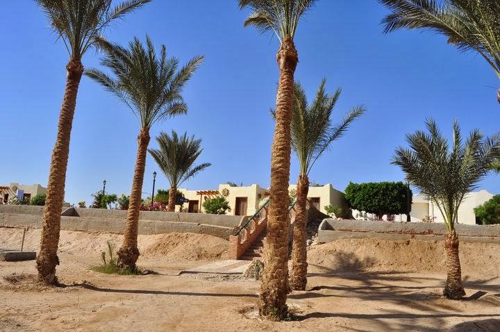 Калин намери фурми, окапали на пясъка, като нашите джанки или череши