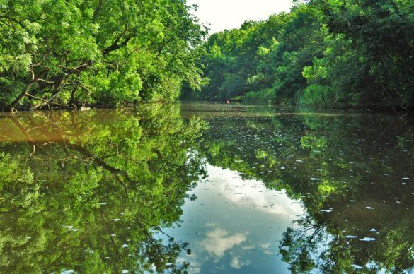 А какво да кажем за  горите на Странджа? В сенчестите им пазви бълбукат водите на малки и големи реки. Сред тях е река Ропотамо, кръстена на гръцката богиня Ро.