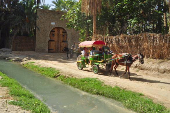 Разходка с каручка из оазиса. Някои от тези кончета бяха доста измършавели А вонята на застояла вода,  която се носи от реките и локвите им е неописуема. В Тунис навсякъде мирише на тиня и на изгнило, но се свиква нали е Африка! А понякога надделява аромат на жасмин и други екзотични растения