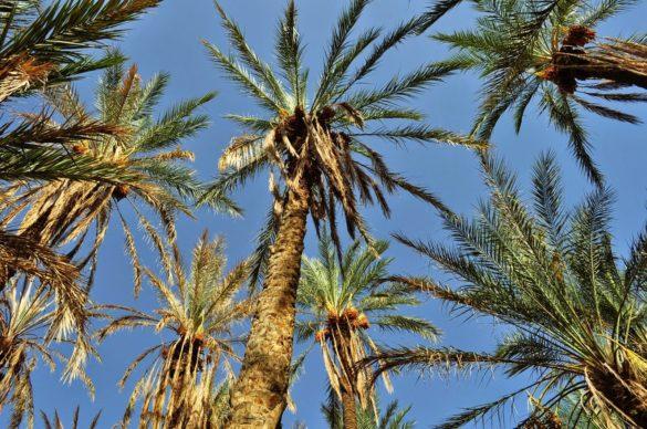 Стигнахме до  малка палмова плантация с над 120 годишни дръвчета. Е това се казва екзотика !