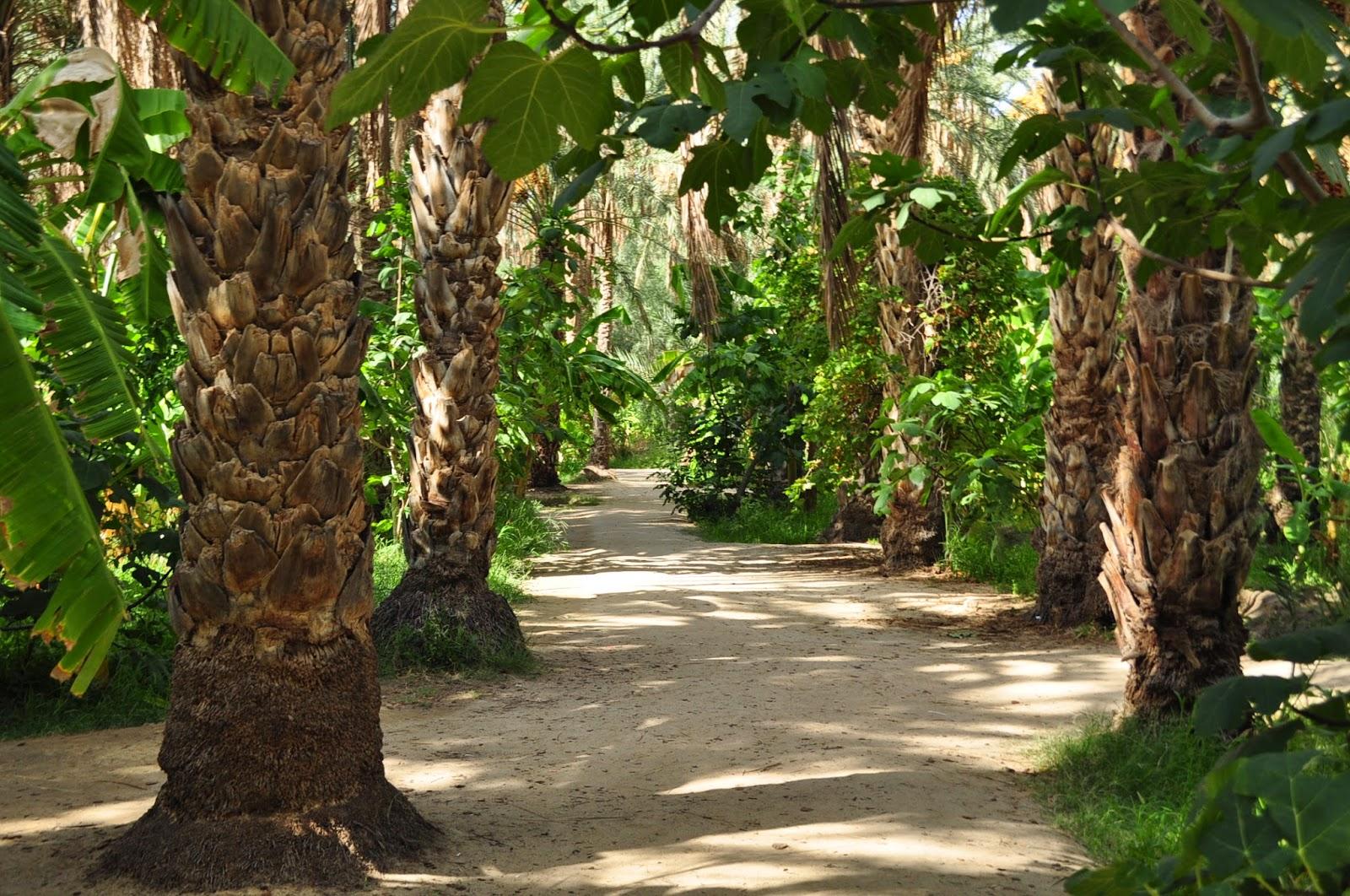 Каква живителна сянка насред нажежените пясъци. Това да не е райската градина?