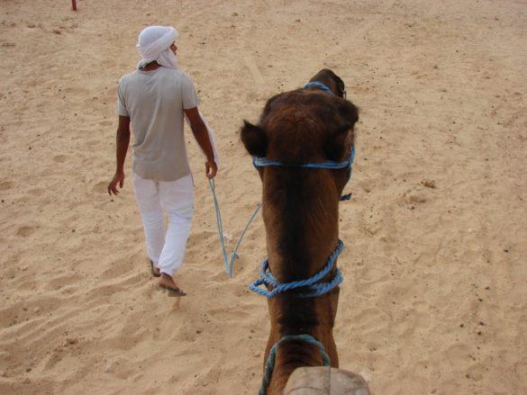 Който казва пустиня, казва и камили. Какво е Сахара без нейните камили и какви туристи щяхме да сме ако не се бяхме записали за най-популярната местна атракция – разходка с камила в пясъка. Продължи час и половина, но ми се стори цяла вечност.