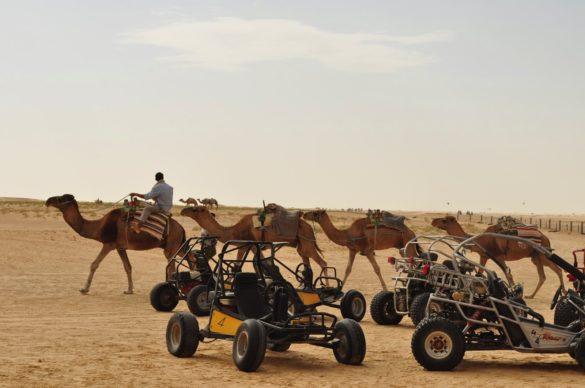 Голям бизнес пада. Камили, делтапланери, бугита – всички ресурси са впрегнати в туризма