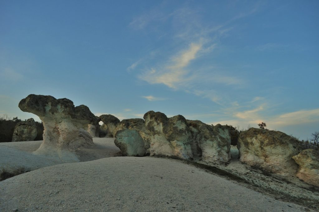 Каменните гъби 1