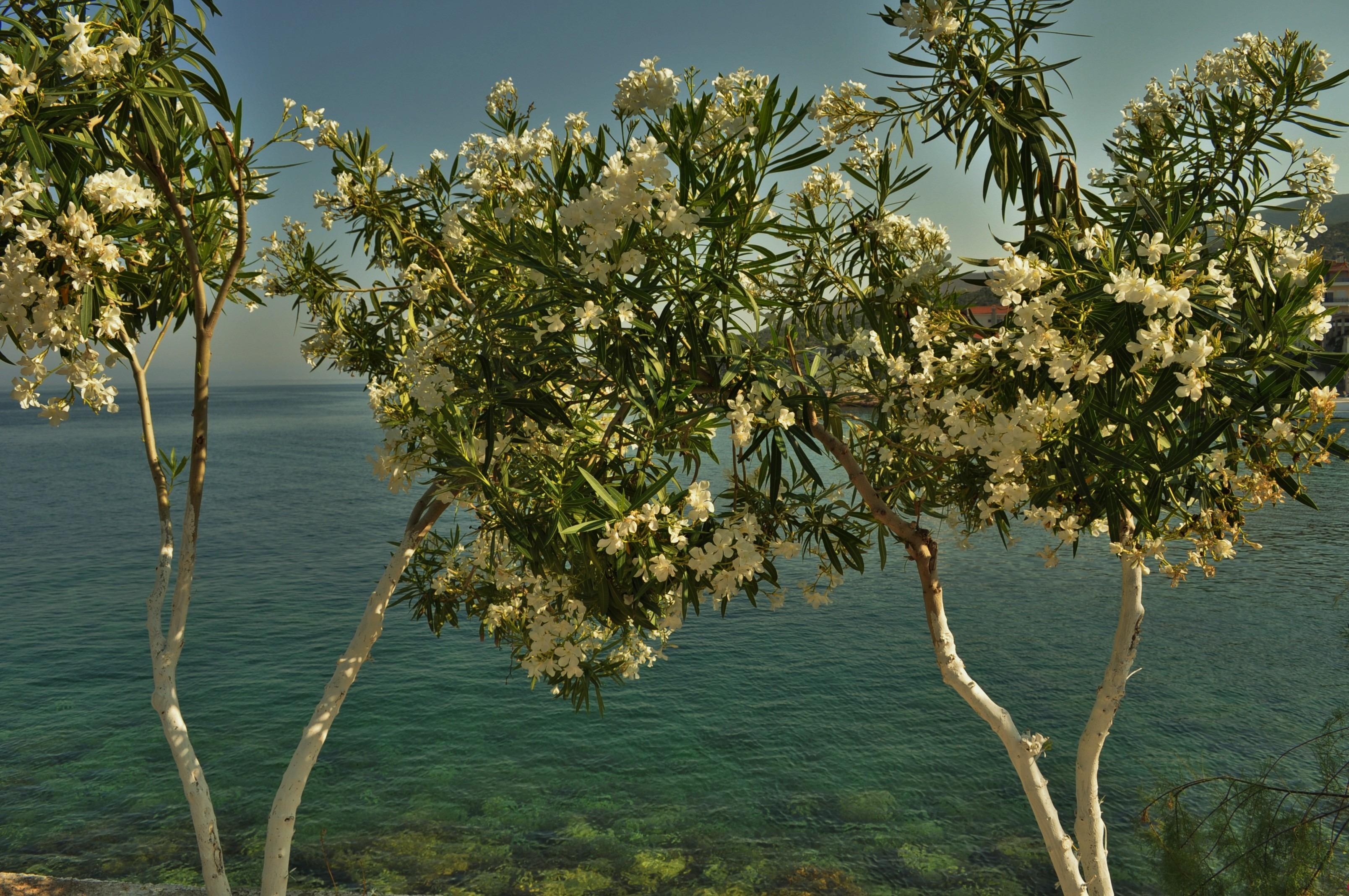 А от сладките крайбрежни селца, белеещи се на фона на олеандровите храсти...