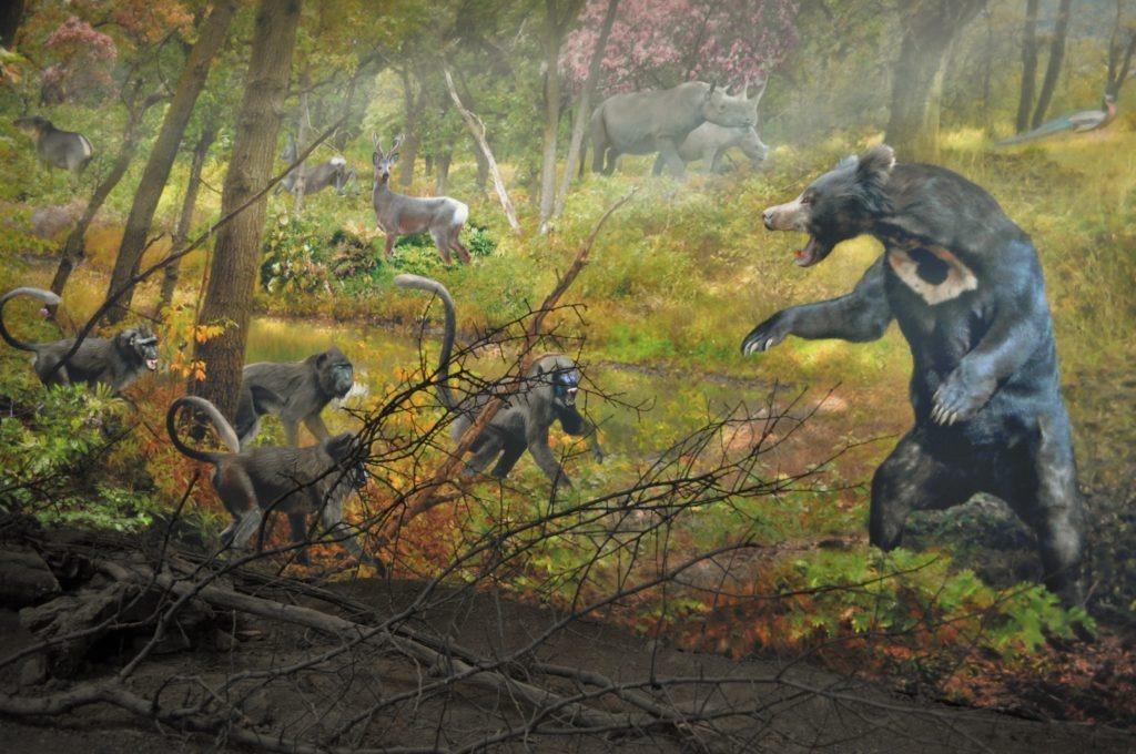 Плиоценски парк мечки