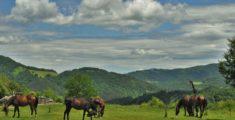 10 идеи за приказни пътешествия в България