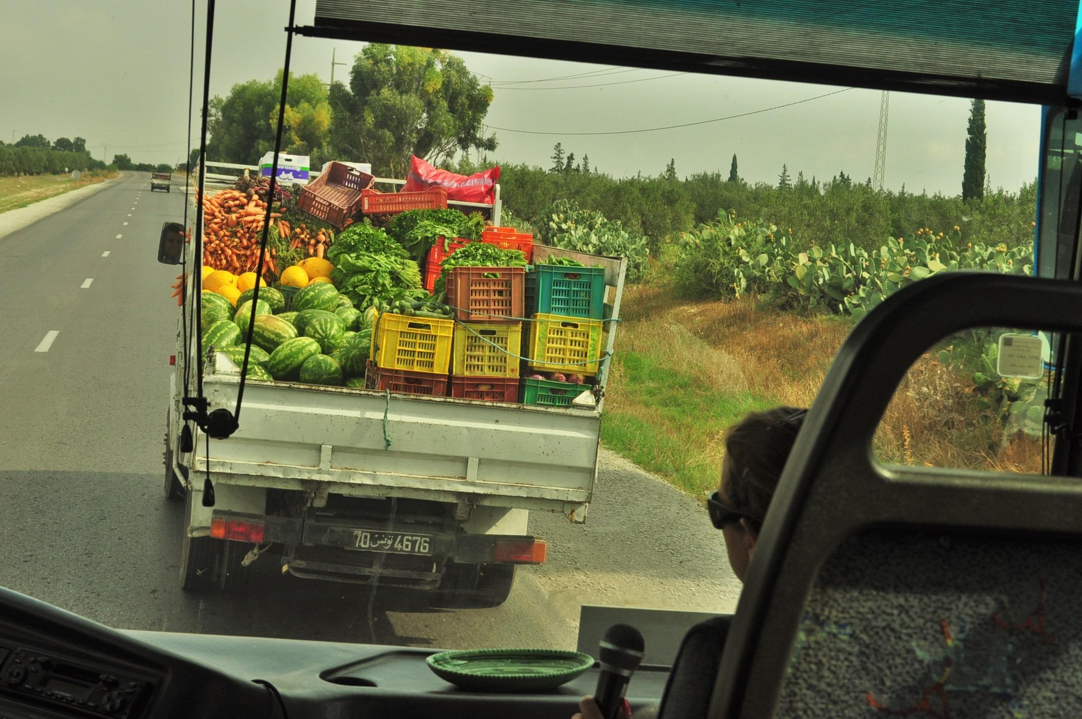 В Северен Тунис се ширят плодородни земи, които раждат божествено вкусни зеленчуци и плодове. Водещи производители са не само на маслини, фурми и пр.,  но и на по-студенолюбиви плодове, като ягоди например.