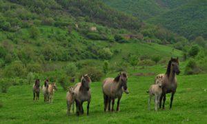 Източните Родопи са Terra incognita за масовия туризъм
