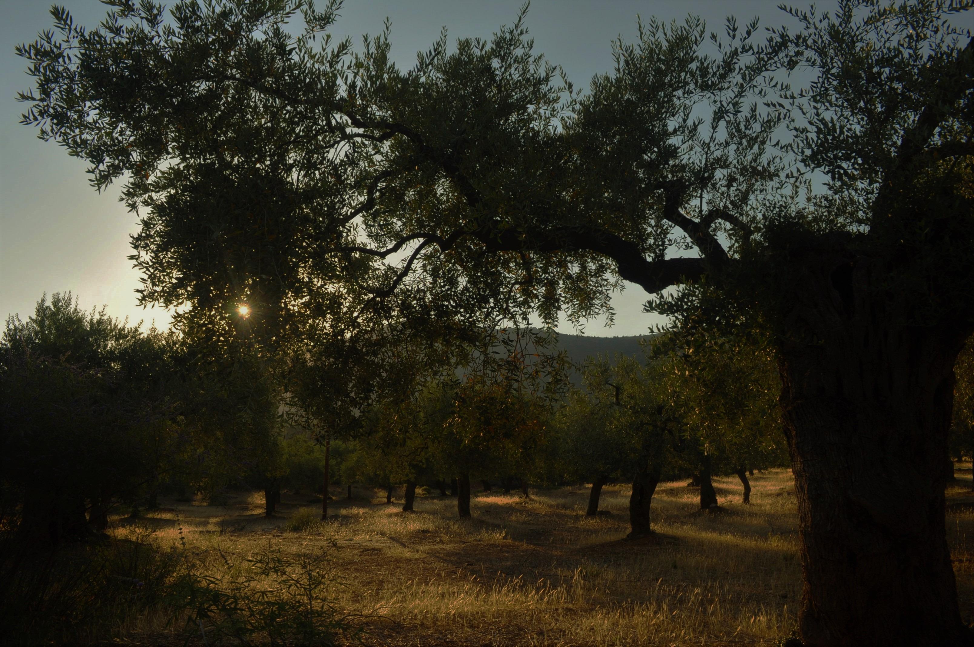 Тук теренът не е толкова стръмен, но пък е предимно каменист и сух. Макар, че срещаме навсякъде вековни маслинени горички и иглолистни дръвчета, осигуряващи живителна сянка в кошмарните летни горещини. Край с. Мариес