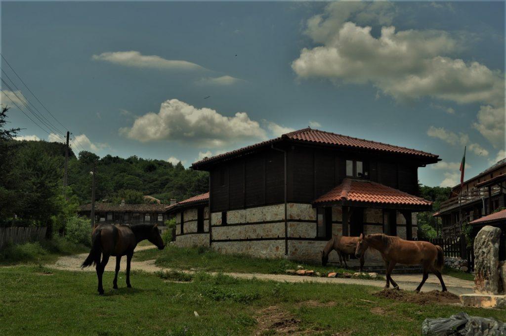село Бръшлян  коне