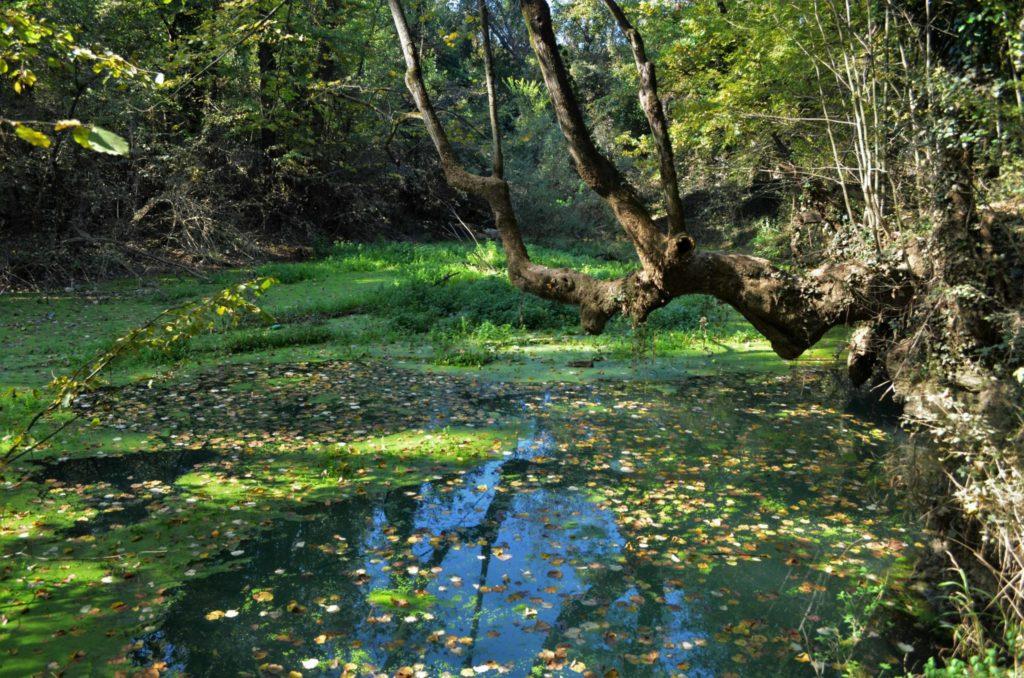 Изворите на река Златна Панега