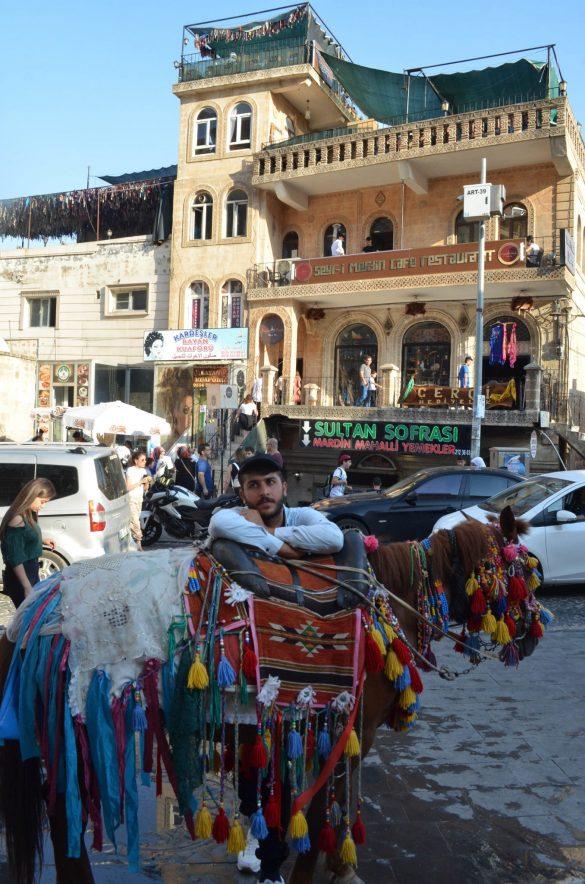 Въпросните декоратинви магаренца, с които се извозва стоката нагоре-надолу по тесните улици и стълби