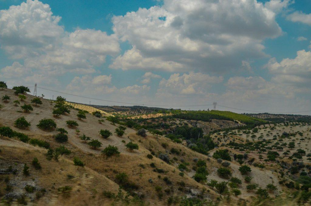 Югоизточна Турция маслини шам фъктък