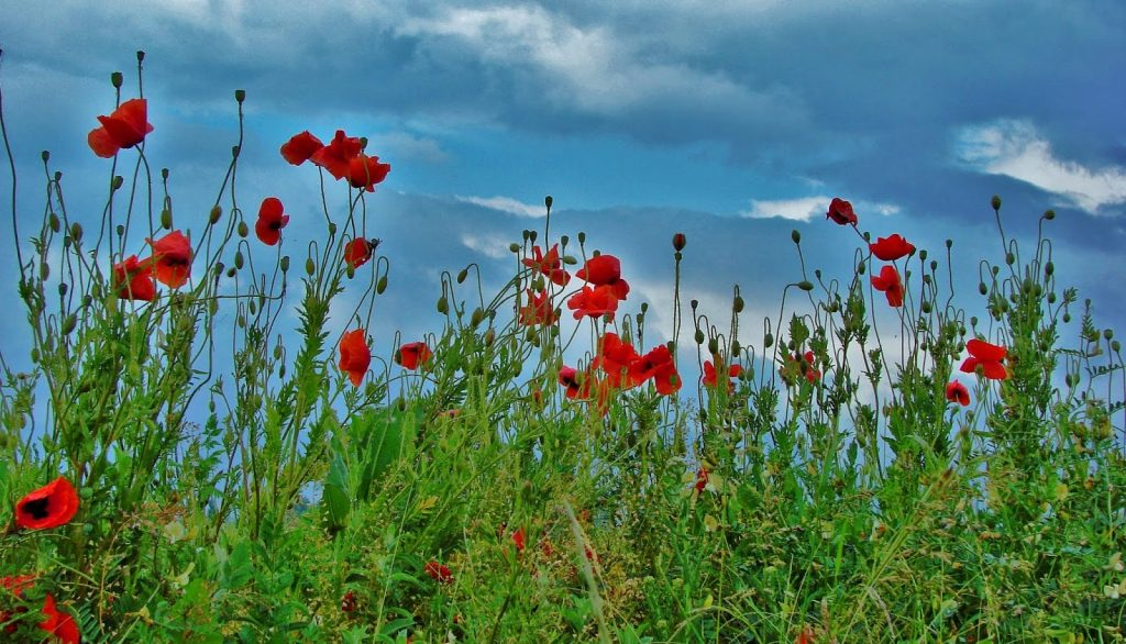 La Valée des roses Kazanlak