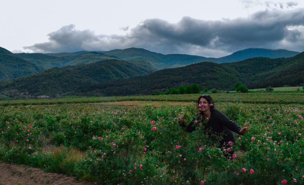Розовата долина розобер