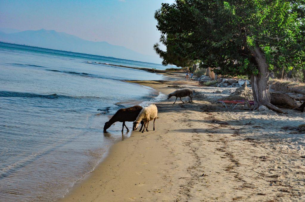 плажове на Тасос Скала Рахони 4